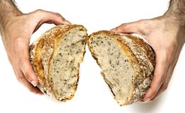 Bread loaf. Hand breaking apart a bread loaf against a white background Stock Photography