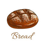 Bread loaf sketch icon for bakery shop Stock Images