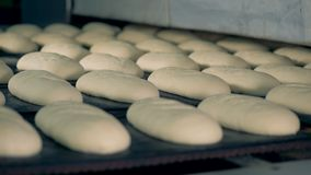 Bread loaves lie on trays before baking in an oven. Many rows of unbaked bread loaves await their turn in an oven stock video footage