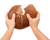 Bread in male hands. Bread is torn in half in male hands isolated on the white background royalty free stock photography