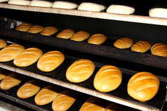 Bread in the man hands Bakery Stocks bread. Manufacture of rusks. A loaf of bread in the hand. Manual production of bakery products. Bread by human hands. Man Royalty Free Stock Photos