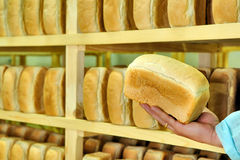 Bread in the man hands Bakery Stocks bread. Manufacture of rusks. A loaf of bread in the hand. Manual production of bakery products. Bread by human hands. Man Stock Photo
