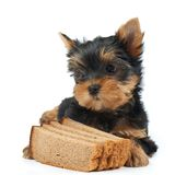 Bread and pet Stock Photos