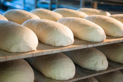 Bread before placing in hot oven. Bread in bakery  before placing in hot oven Stock Photography