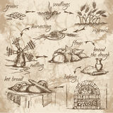 Bread production. Freehand drawing of bread production stages on the old watercolor background. From grains to bread. Fresh, tasty and hot bread. Vector Royalty Free Stock Image