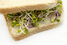 Bread with radish sprouts Royalty Free Stock Photo