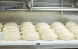 Bread Rising in Commercial Kitchen Royalty Free Stock Images