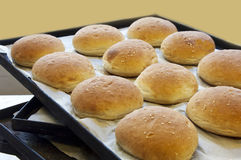 Bread rolls on a baking tray Royalty Free Stock Photography