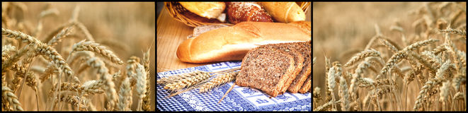 Bread and rolls from whole grains and wheat field Stock Image