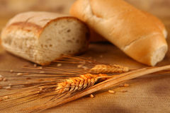 Bread rye spikelets on an old background Stock Photo
