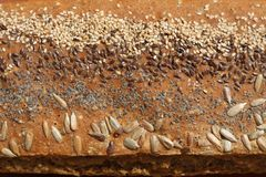 Bread with seeds Stock Images
