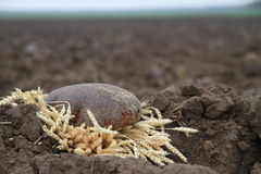Bread in a soil. Loaf of bread in a  soil Stock Photos