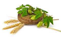 Bread spikelets hop Stock Image