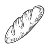 Bread vector hand drawn illustration. Other types of wheat, flour bread.. Gluten food engraved collection. Black isolated on white background Royalty Free Stock Image