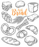 Bread vector hand drawn set illustration. Other types of wheat, flour fresh bread.. Gluten food bakery bread engraved collection. Black bake organic food Royalty Free Stock Photos