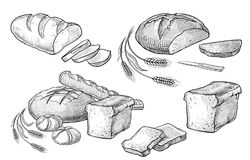 Bread vector hand drawn set illustration. Other types of wheat, flour fresh bread. Gluten food bakery engraved stock illustration