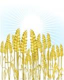 Bread wheat. Golden natural grain royalty free illustration