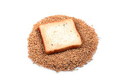 Bread and wheat. Slice of wheat brown bread with wheat isolated on white background Stock Images