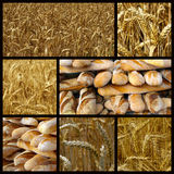 Bread and wheat. A nice view of bread and wheat Stock Image