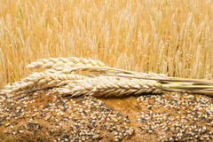 Bread and wheat cereal crops Royalty Free Stock Photos
