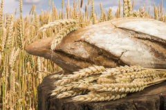 Bread and wheat cereal crops. Stock Image