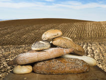 Bread and wheat cereal crops. Stock Images