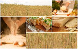 Bread wheat collage concept. Bread wheat collage agriculture harvest nature Stock Photo