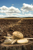 Bread and wheat ears. Plowed land stock photography