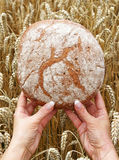 Bread for the World Stock Images
