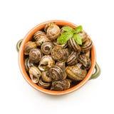 Breaded Snails Royalty Free Stock Photo
