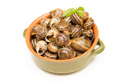 Breaded Snails Royalty Free Stock Image