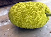 Breadfruit Stock Photography