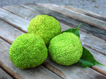 Breadfruit - Artocarpus altilis. Fruit of the Breadfruit tree (Artocarpus altilis) on the table Stock Image
