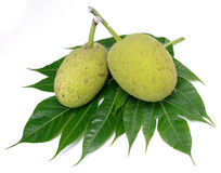 Breadfruit isolated Royalty Free Stock Images