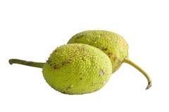 Breadfruit odizolowywają na białym tle zdjęcie royalty free
