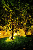 Breadfruit tree Royalty Free Stock Image