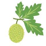 Breadfruit wektoru ilustracja Obrazy Royalty Free