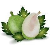 Breadfruit Stock Photos