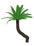 Breadtree, broodboom, eastern cape giant, bushman Stock Image