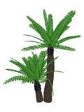 Breadtree, broodboom, Ostkap-Riese, Cycad der Fluss des Buschmanns oder uJobane, encephalartos altensteinii, Baum - 3D übertragen Lizenzfreie Stockfotografie