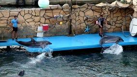 Break-dancing dolphins stock video