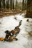 Break in the ice. royalty free stock photography