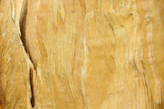 Break pine wood texture. Close-up Stock Images