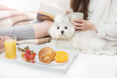 Breakfast in bed. A girl reading a book. affection a pet dog pup white maltese. Calm relaxed home mood Stock Photos