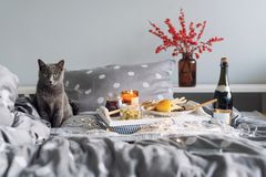 Breakfast in bed, a tray with cheese, grissini, jam from young fir cones, champagne and a candle. Gray cat in bed Royalty Free Stock Image