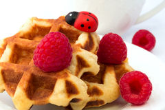 Breakfast Belgian waffles homemade raspberry dessert Royalty Free Stock Image
