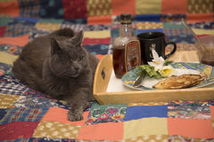 Breakfast with Cat Stock Image