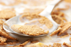 Breakfast cereal with milk close-up Royalty Free Stock Photography