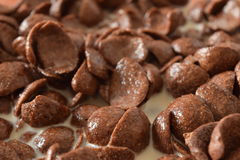 Breakfast Chocolate Corn Flakes. Close Up Royalty Free Stock Photo