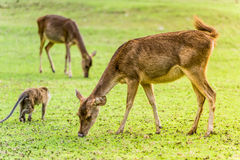 Breakfast. The deer are having breakfast Royalty Free Stock Images